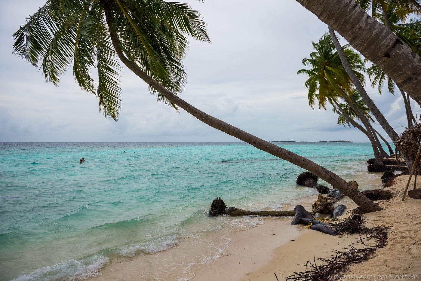 Пляж с пальмой Мальдивы
