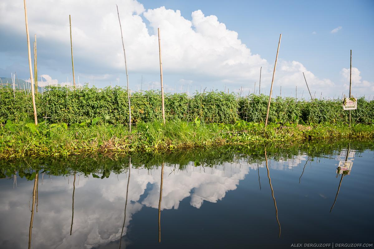 Плавучий огород Мьянма озеро Инле