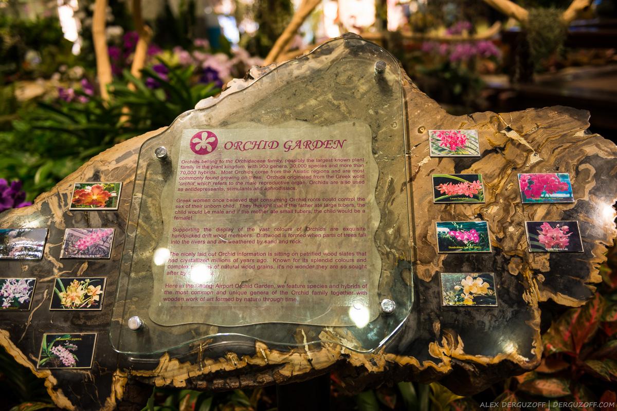 Сад орхидей Сингапур аэропорт