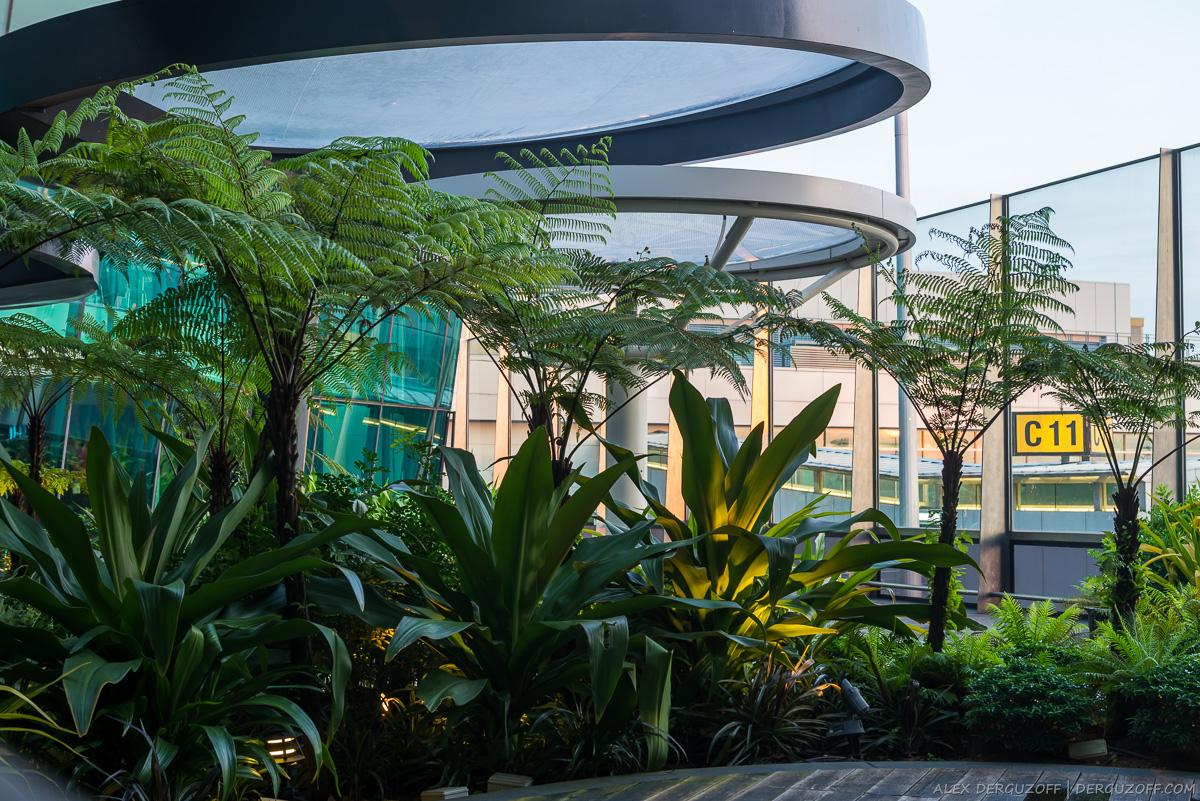 Сад на крыше аэропорта Сингапура