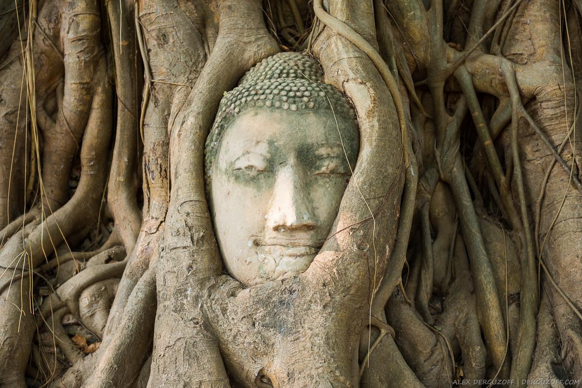 Каменная голова Будды вросшая в ветви дерева