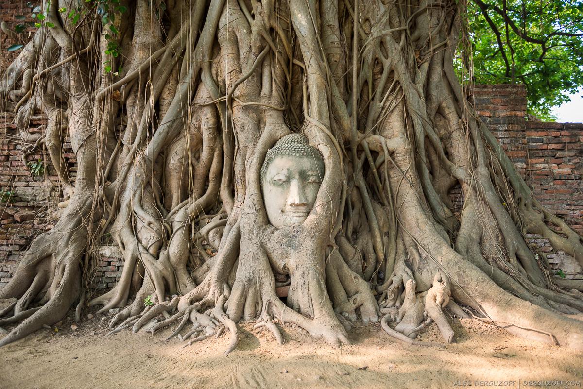 Голова Будды вросшая в дерево Таиланд Аюттхая