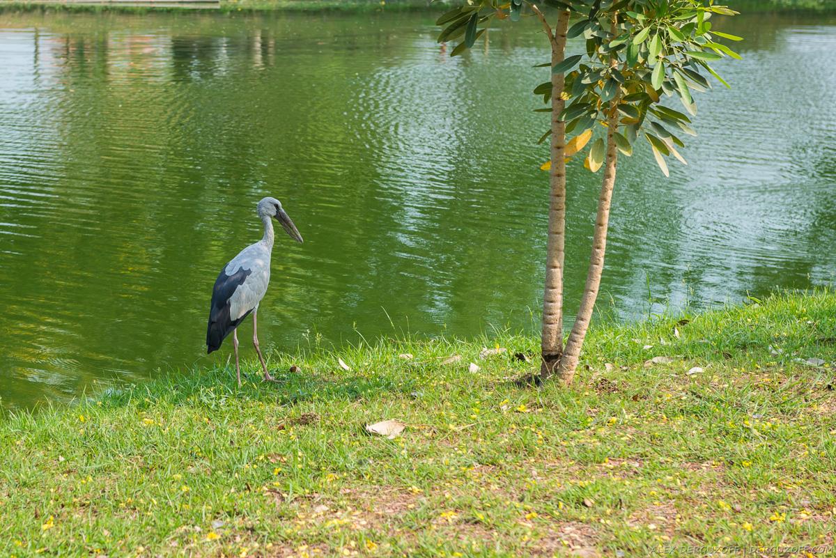 Цапля на берегу пруда