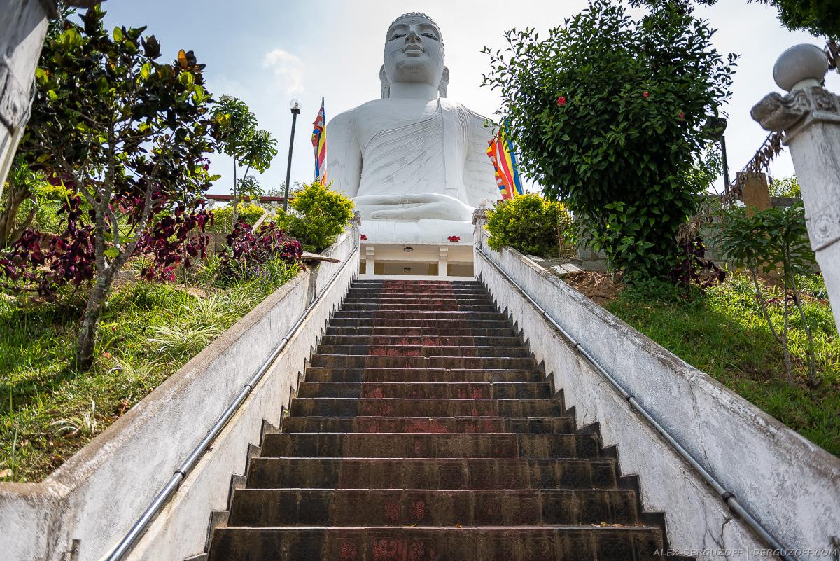 Лестница ведущая к статуи Будды в позе Лотоса Шри-Ланка Канди