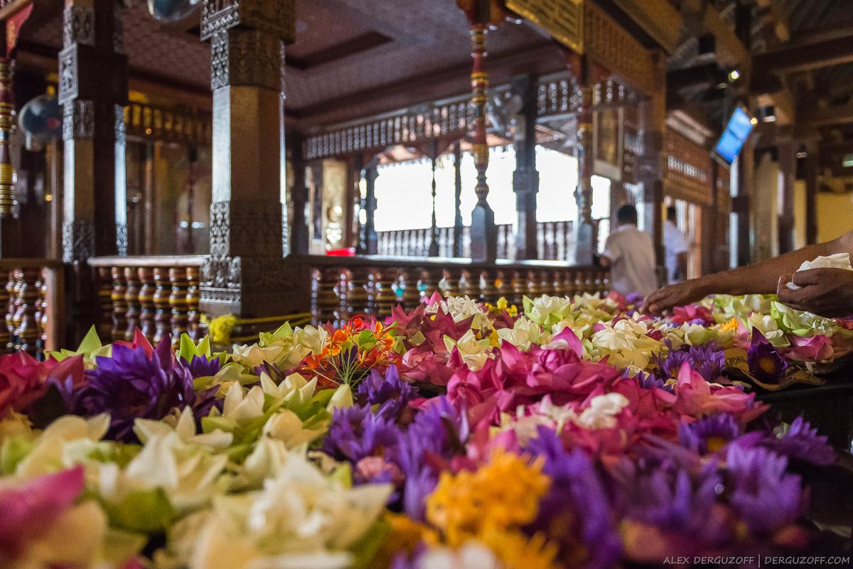 Цветы напротив алтаря с зубом Будды Шри-Ланка Канди