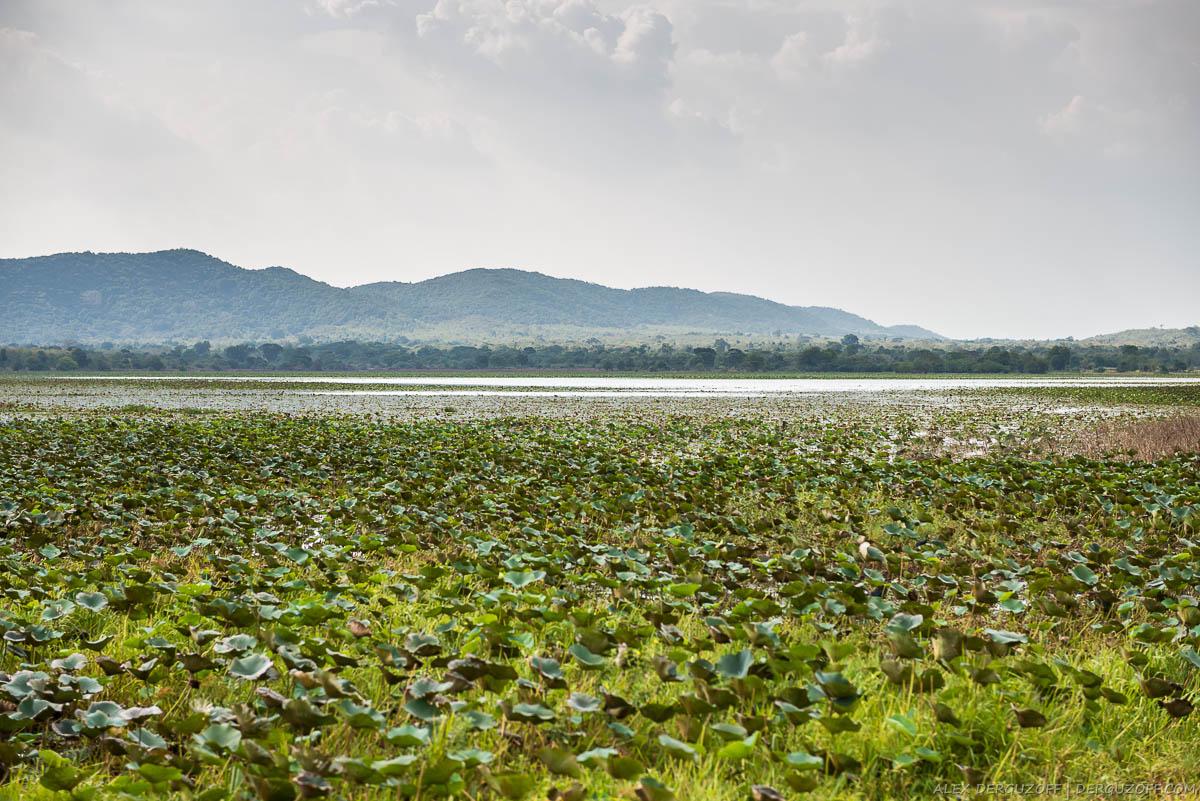 Болота на фоне гор Шри-Ланка