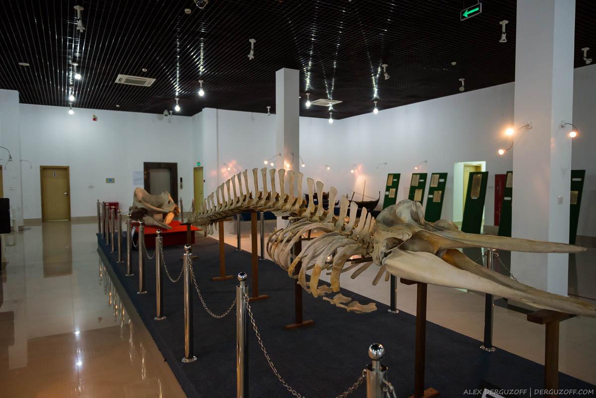 Скелет животного в музее Мале Мальдивы