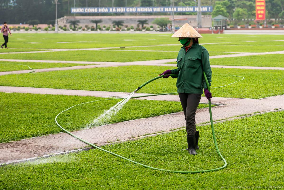 Работник в соломенной шлапе поливает газон на площади Хо Ши Мина