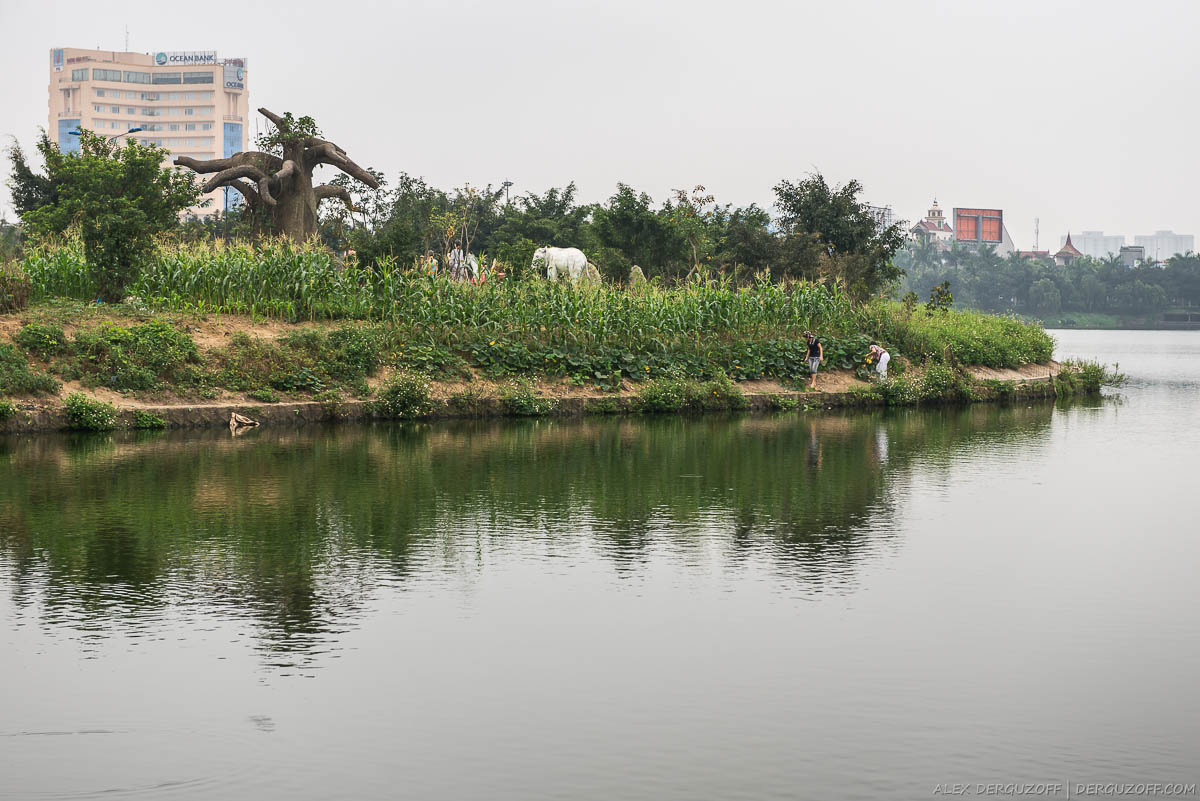 Деревья на берегу водоема Вьетнам
