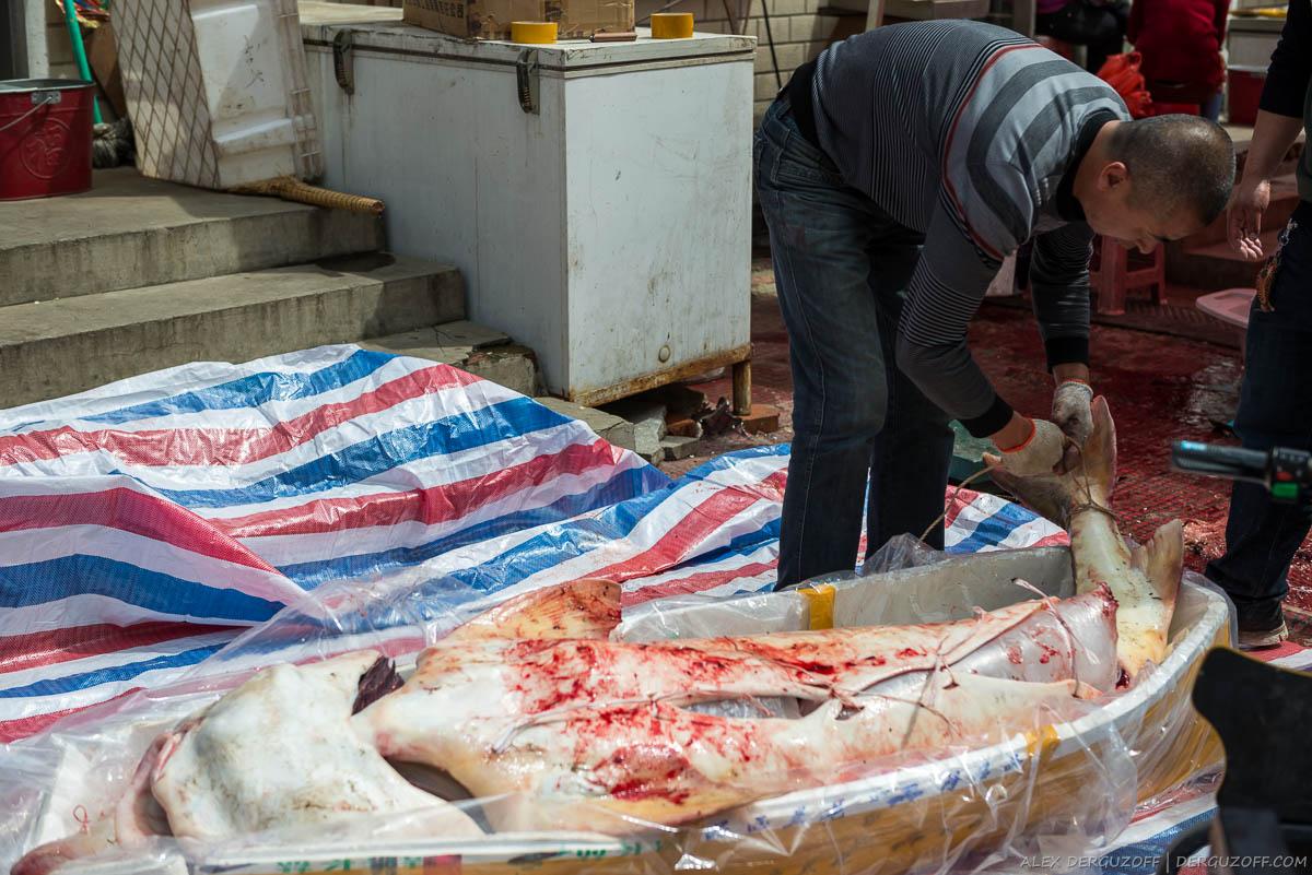 Китаец упаковывает огромную рыбу