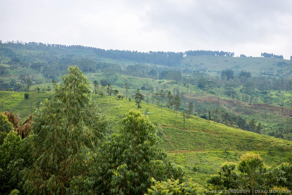 Чайные холмы Шри-Ланки
