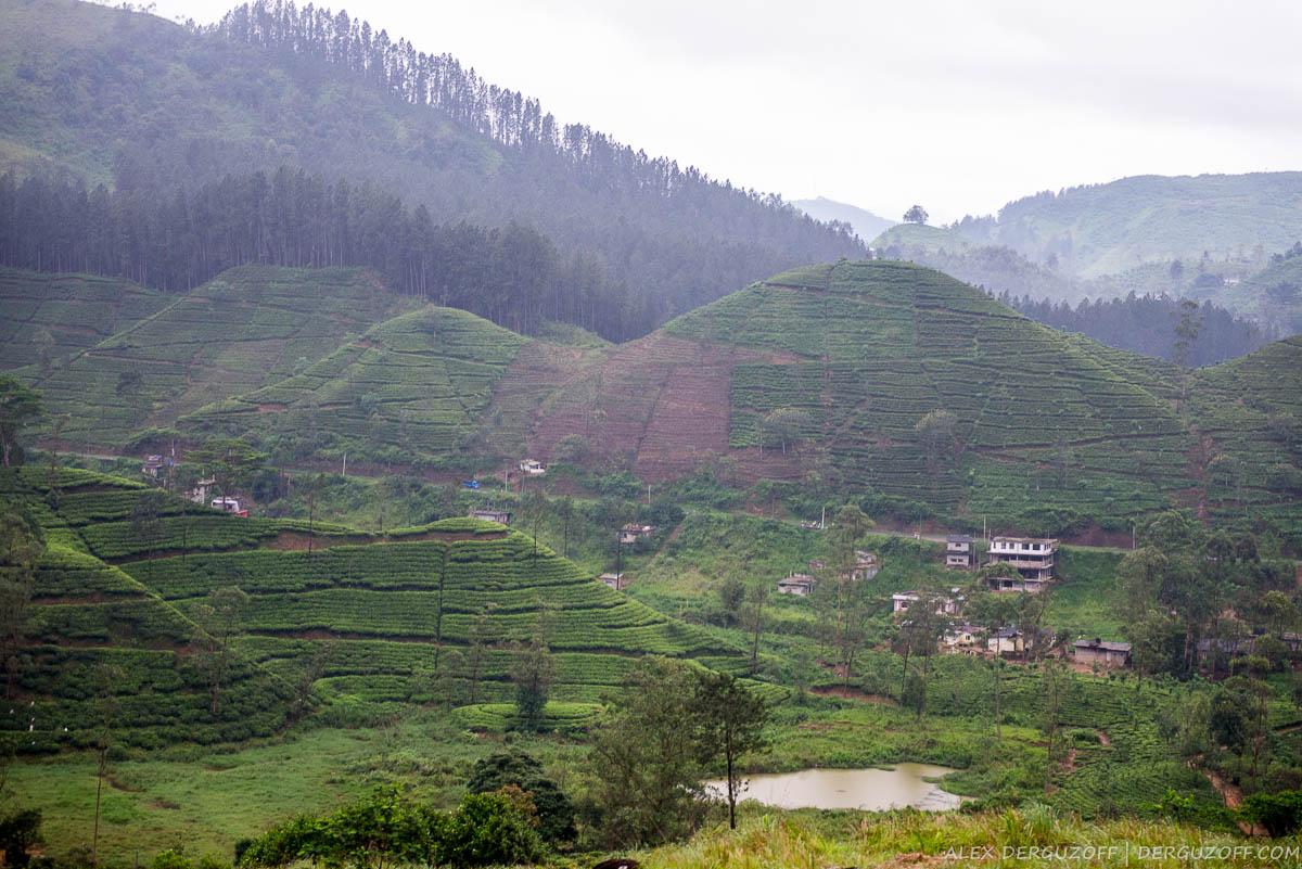 Холмы с чайными плантациями Нувара-Элия