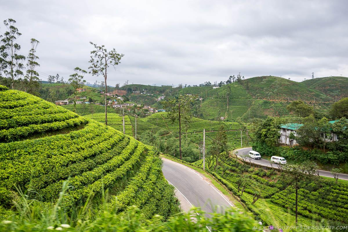Дорога между чайными плантациями Шри-Ланка
