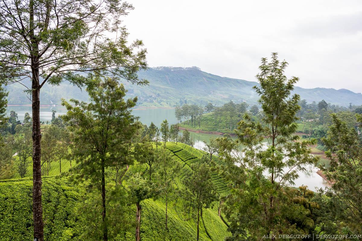 Пейзаж чайных плантаций Шри-Ланки