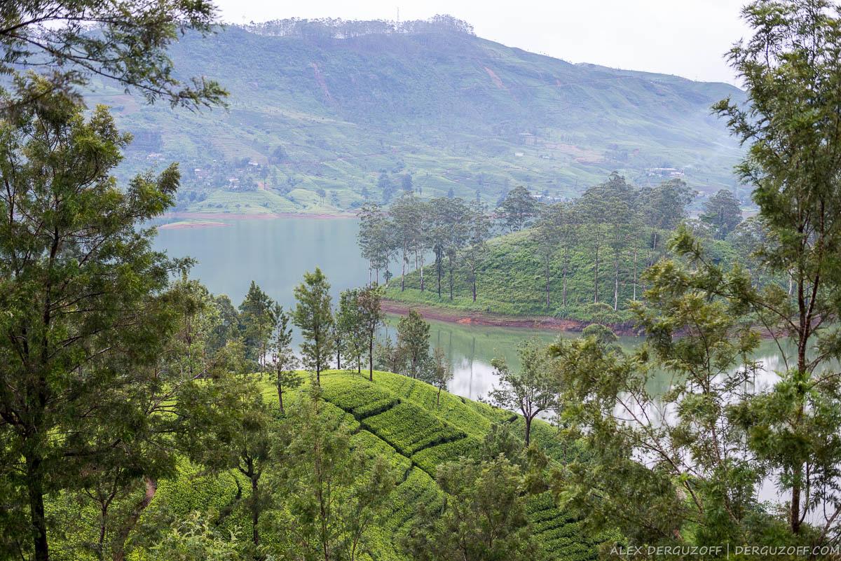 Озеро между чайных плантаций Шри-Ланка Хаттон