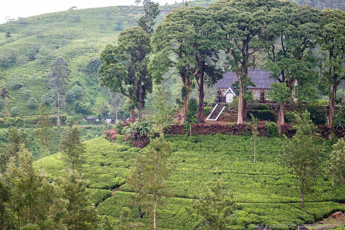 Дом на холме вокруг посадок чая