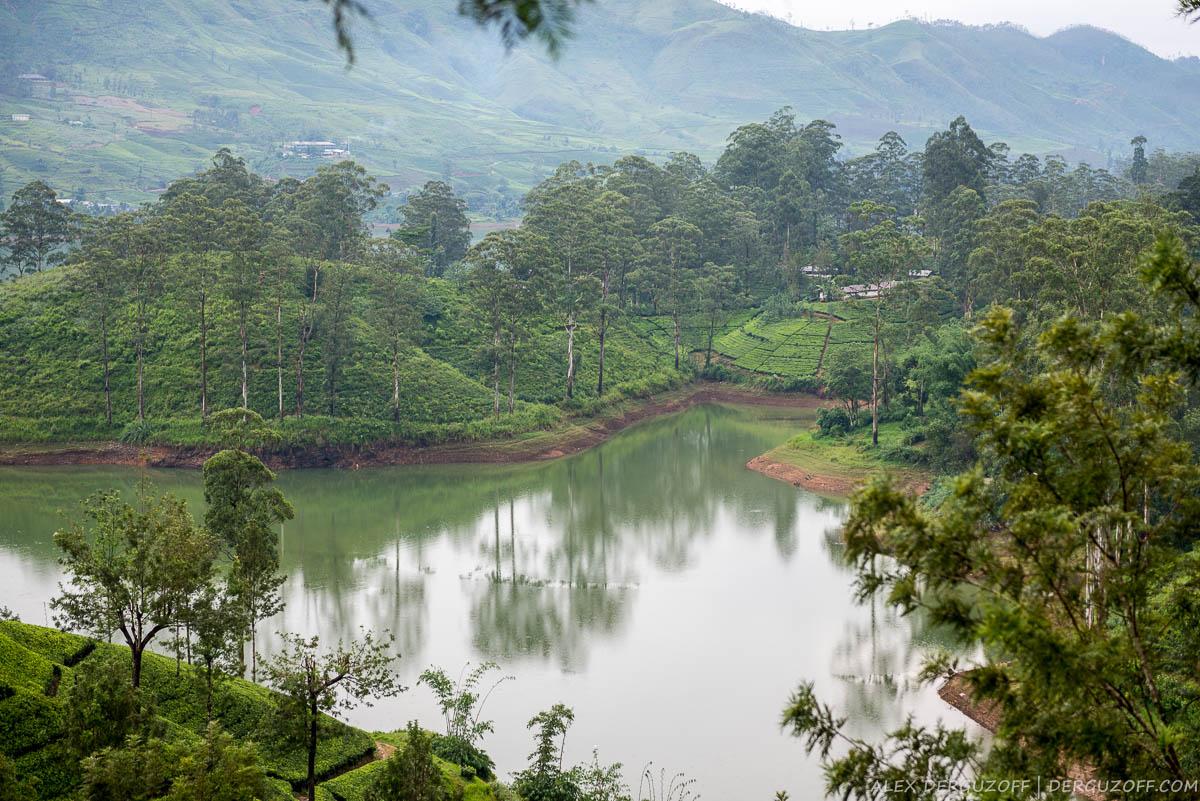 Чайные плантации в тумане Шри-Ланка