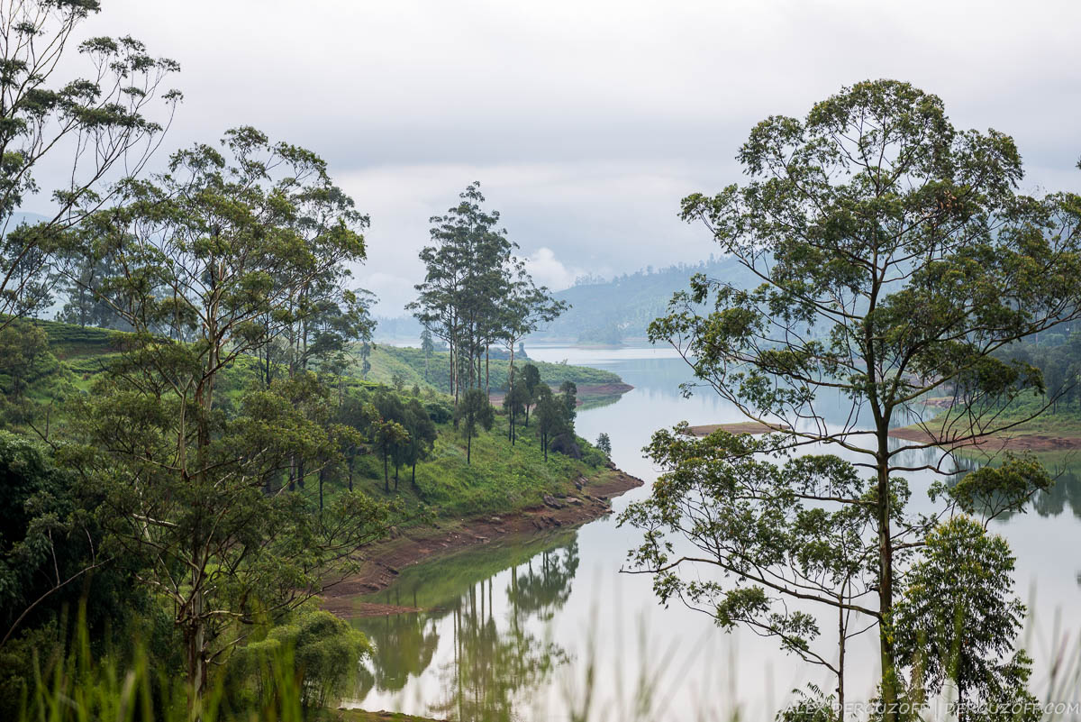 Туман над озером и чайной плантацией