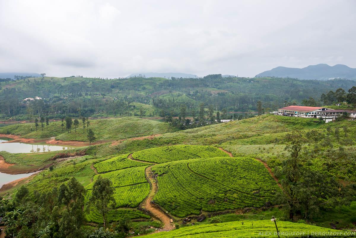 Панорама плантаций чая Шри-Ланка Хаттон