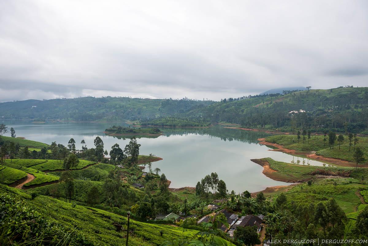Пейзаж с чайными плантациями
