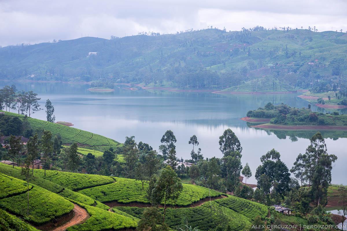 Вид на озеро и посадки чая Шри-Ланка